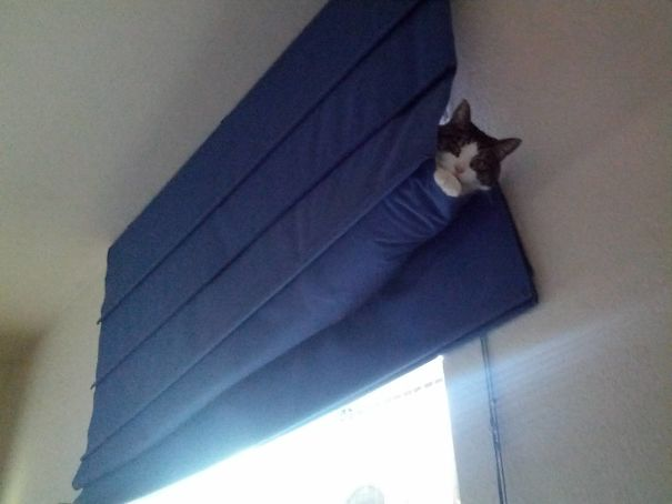 cat in the curtain
