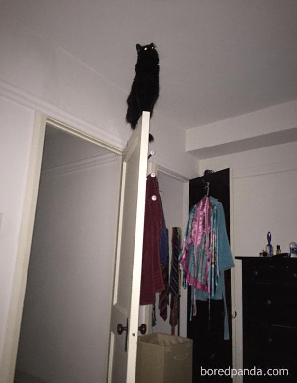 cat on top of the door
