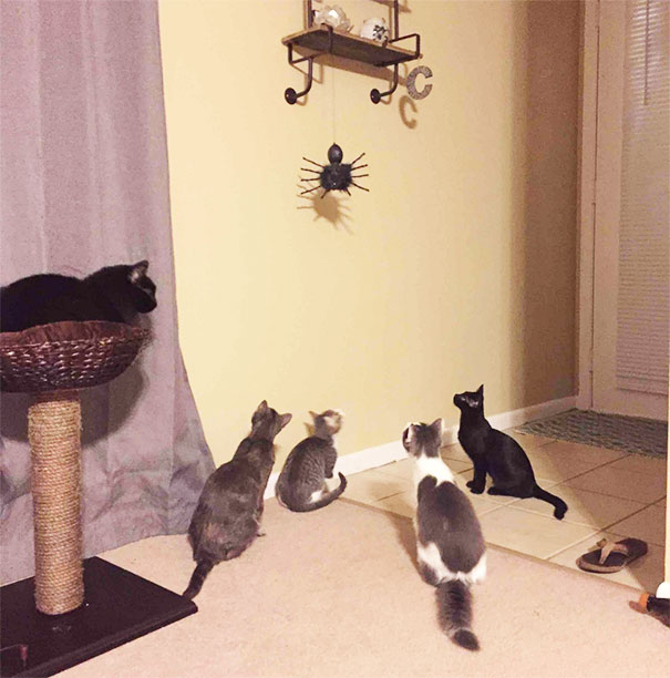cats noticed the halloween decor