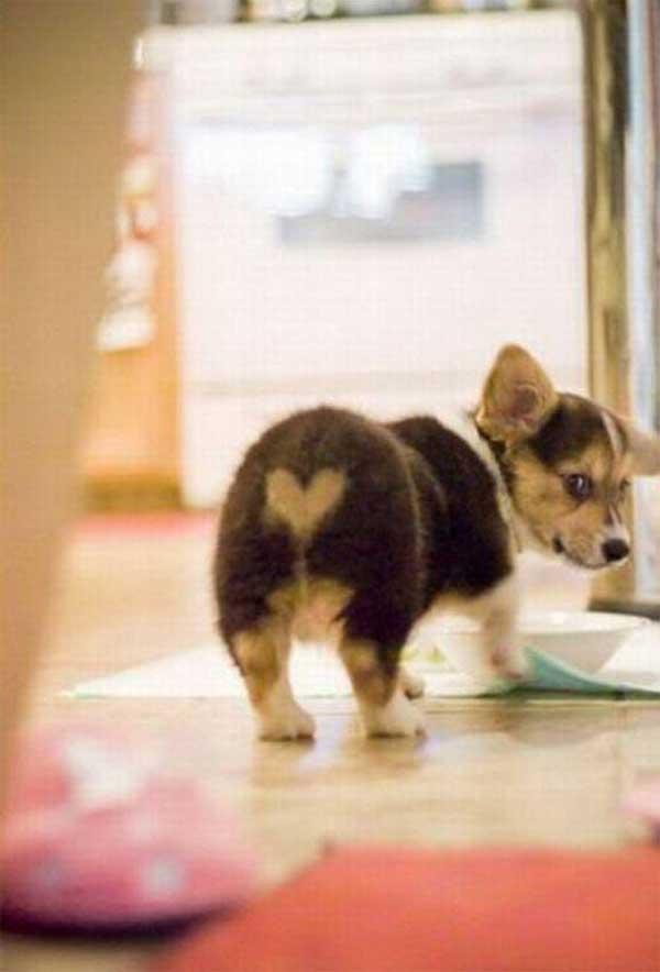 coated dog