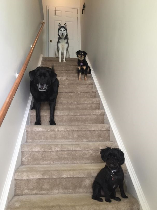 dog album cover