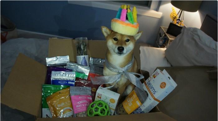 dog bday gift