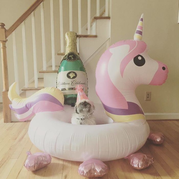 dog bubbly and unicorn