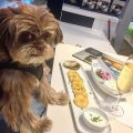 dog in fine dining