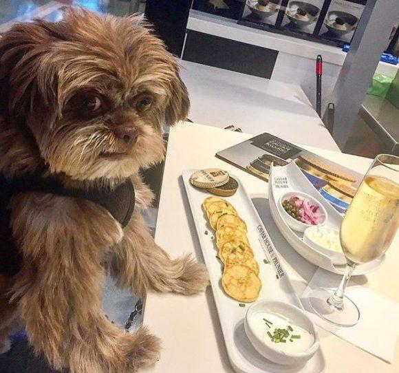 dog in fine dining