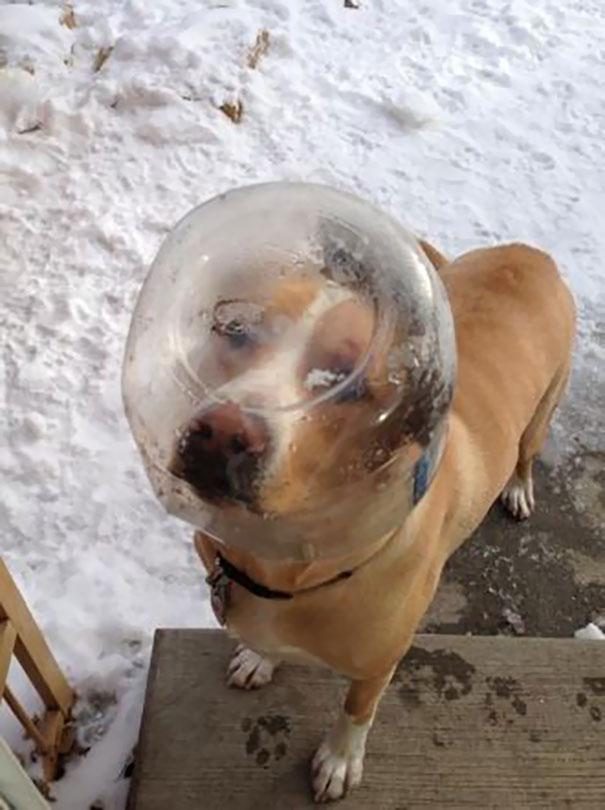 dog knocking on door