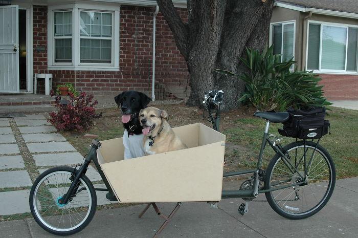 dog on a bike