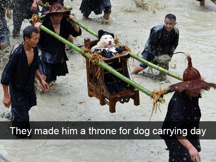 dog throne