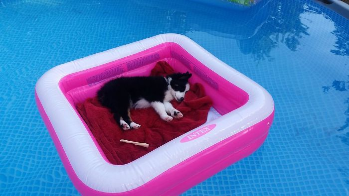 dog water bed