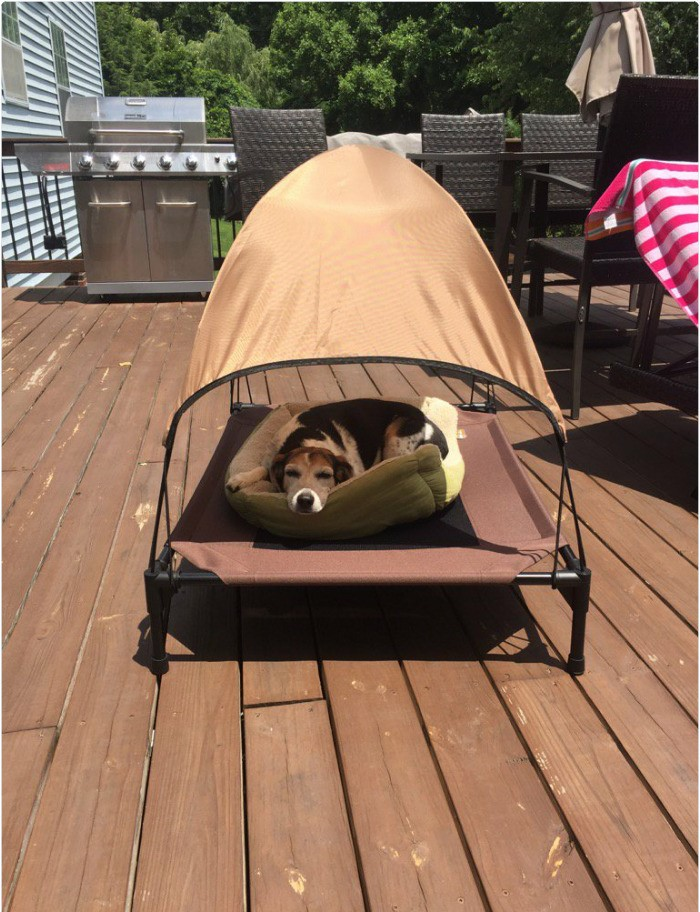 dog with own tent