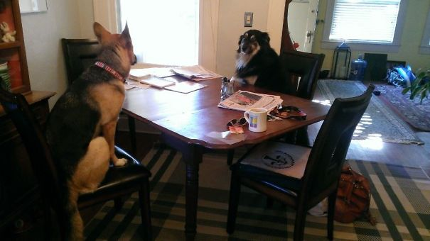 dogs in a meeting