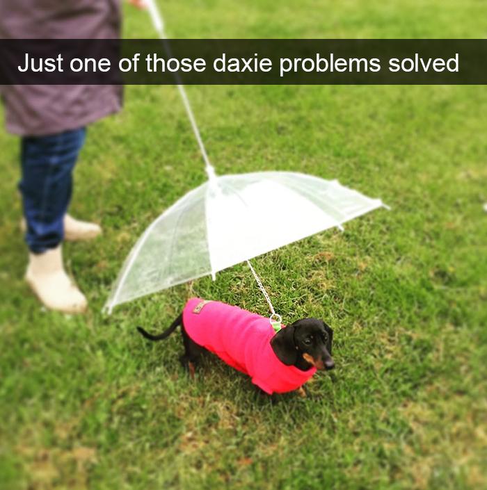 dog's own problem