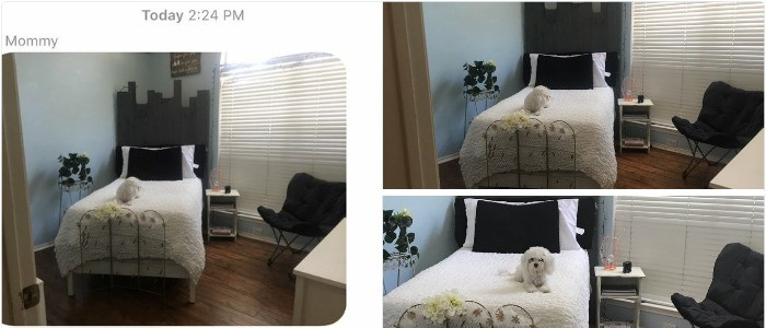 dog's own room