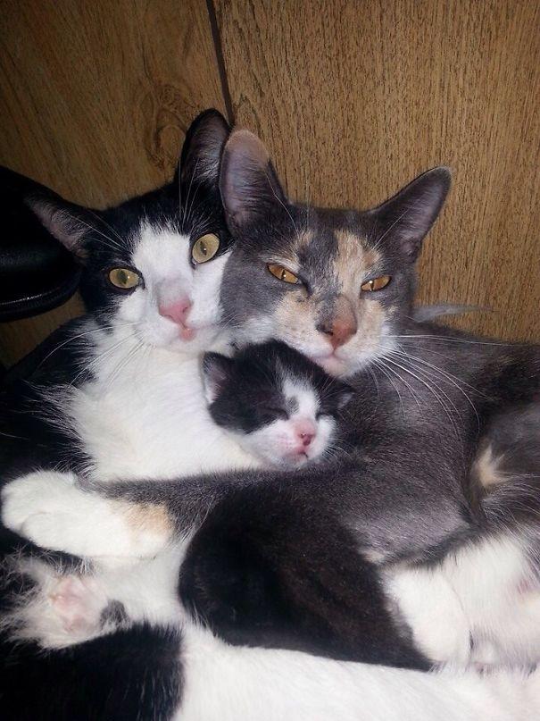 happy family of cats