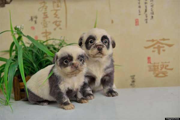 more little pandas