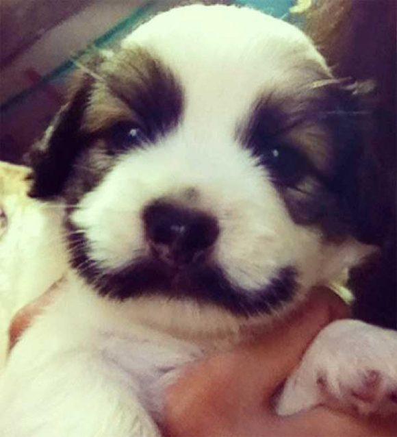 mustache on dog