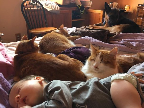 pets incharge of baby