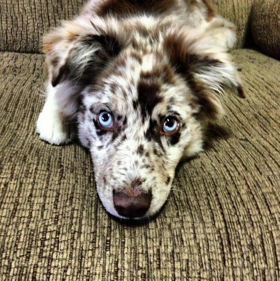 polka dot face dog