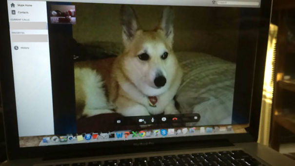 skyping with a dog