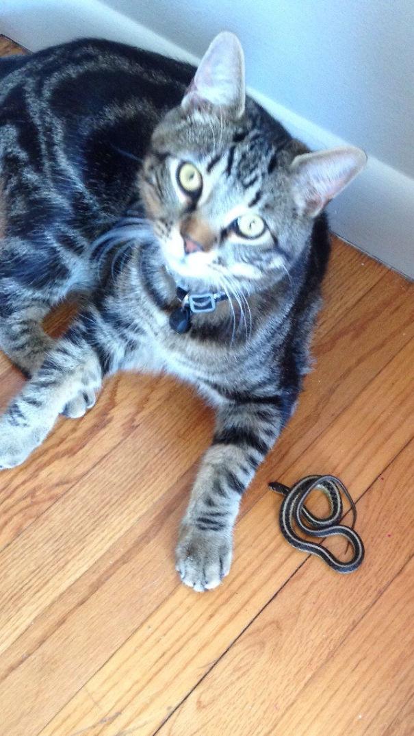 Cat brings a snake