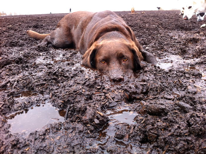 Happiness is just lying around in the mud with your buddies old and new