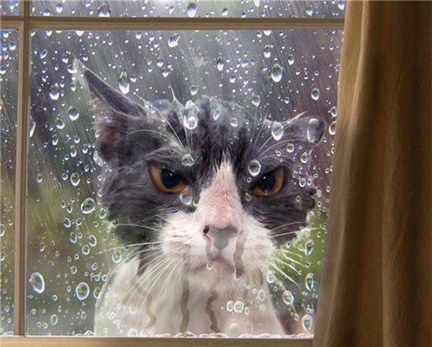 Let me in -cat