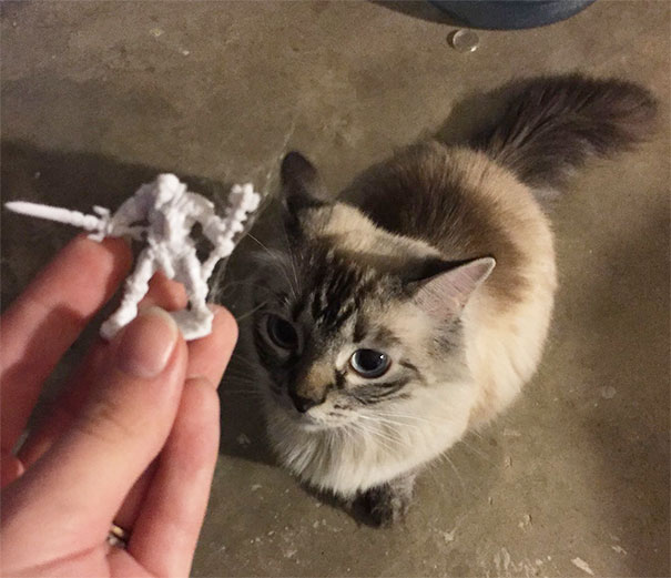 cat brings mini action figure