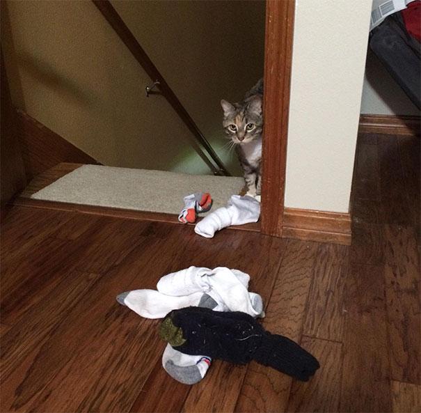 cat brings socks