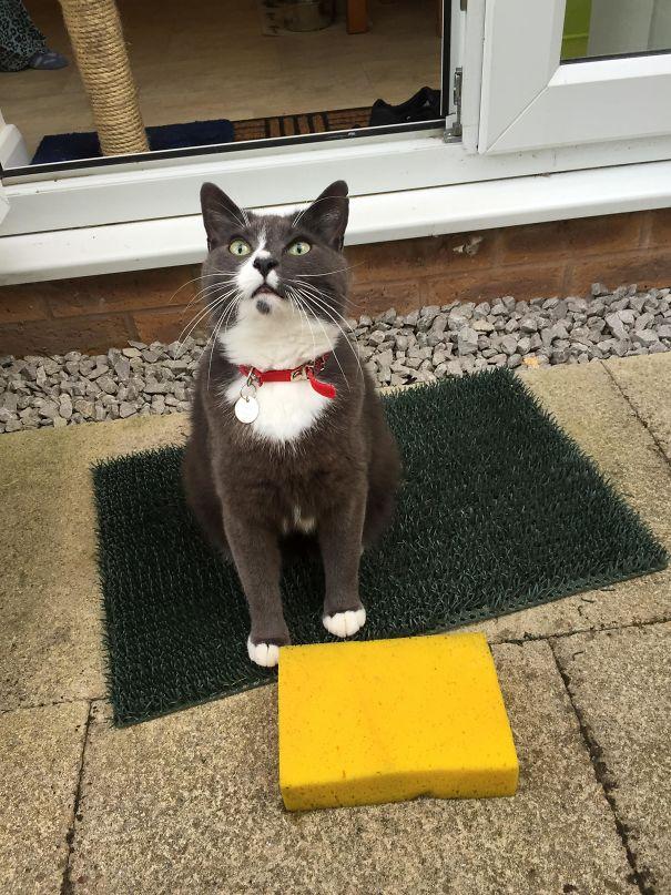 cat with sponge