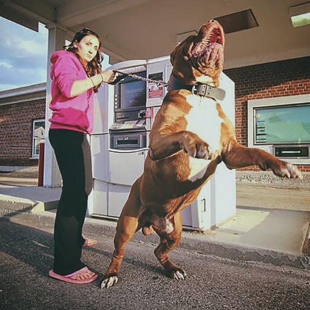 dog attacking