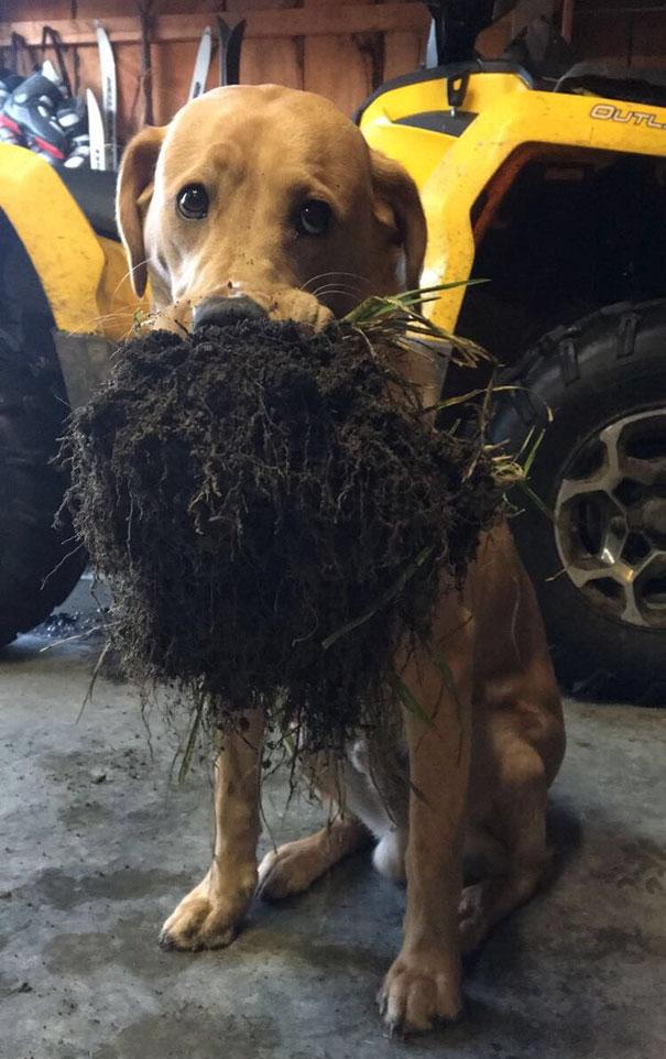dog brought dirt