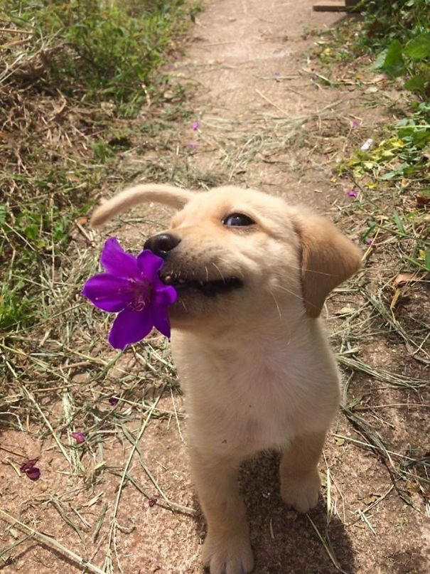 dog brought flower