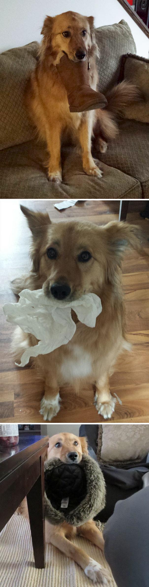 dog brought random things