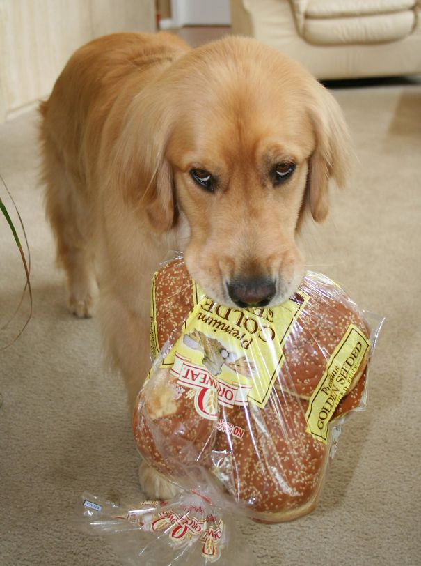 dog grabs bread from the pantry