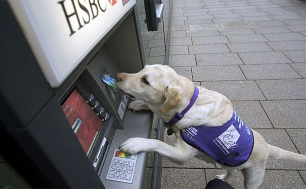 dog retrieves cash cards