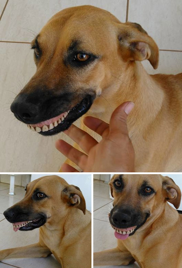 dog with denture