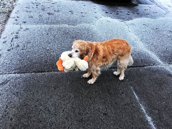 dog with ducky toy