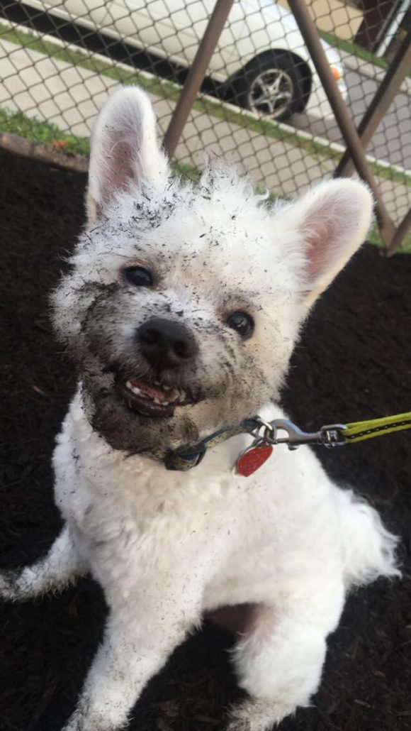 mischievous pupper