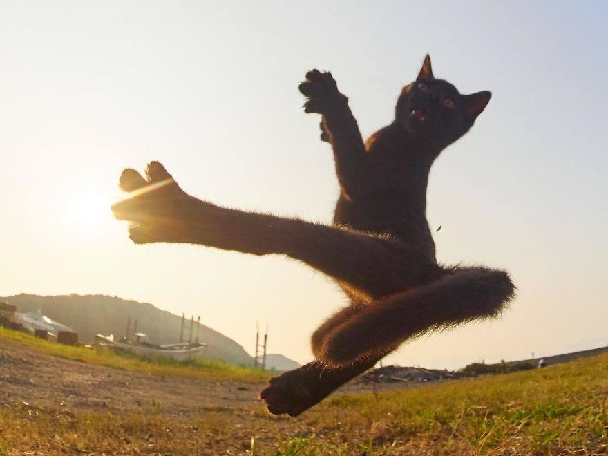 This Cat Says Hai Yah