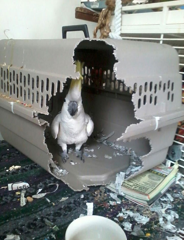 bird destroys cage
