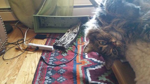 cat disaster