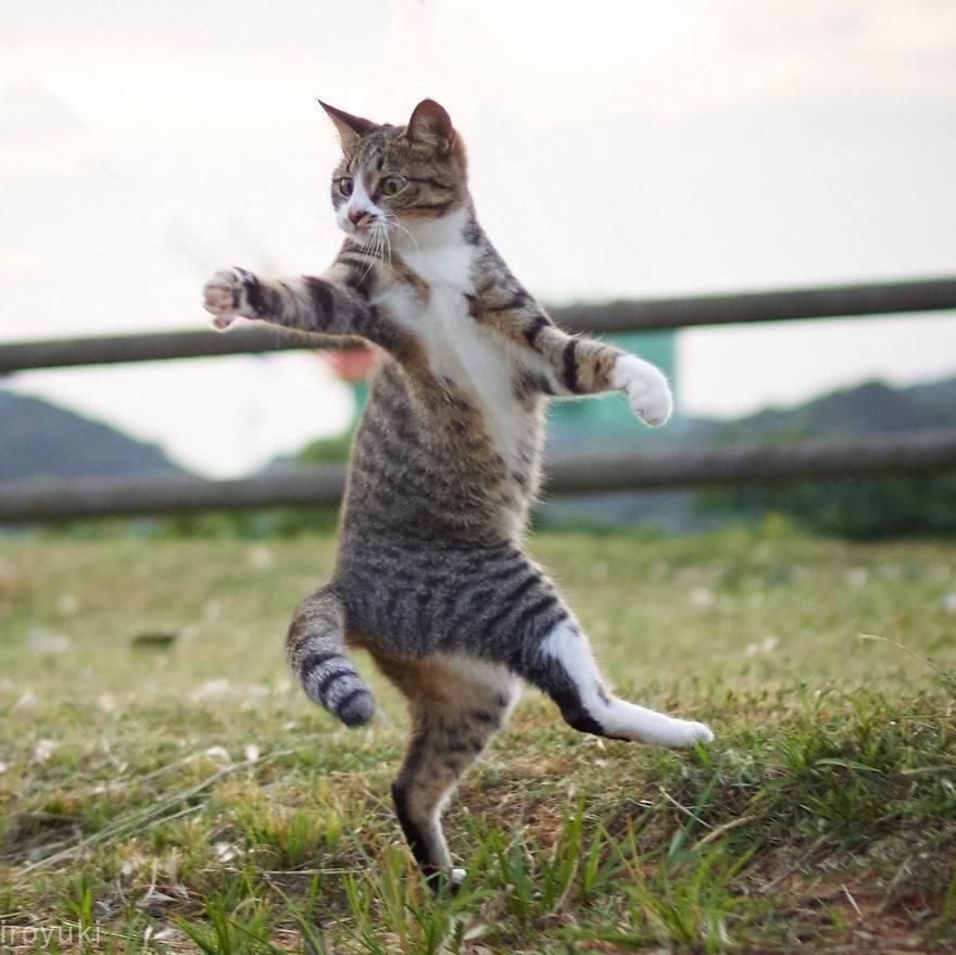 cat doing taichi