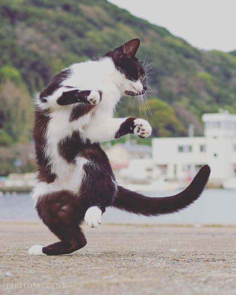 cat doing thriller dance