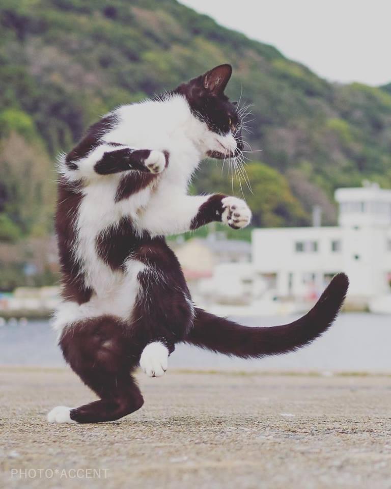 cat doing thriller dance