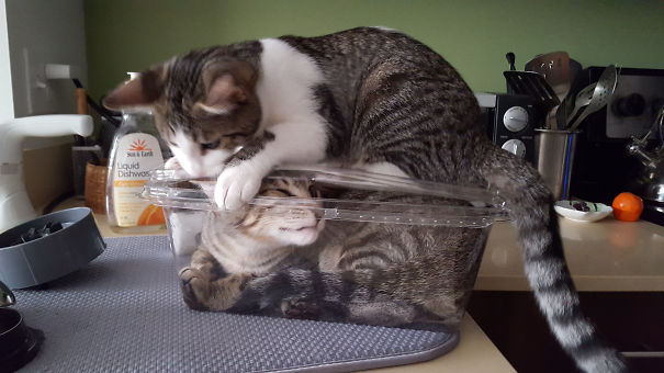 cat hates new cat