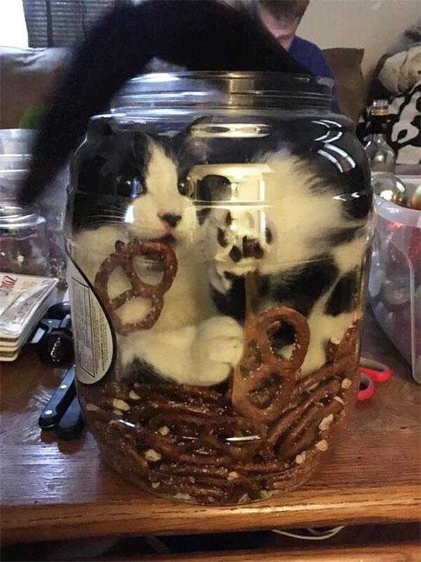 cat inside pretzel jar