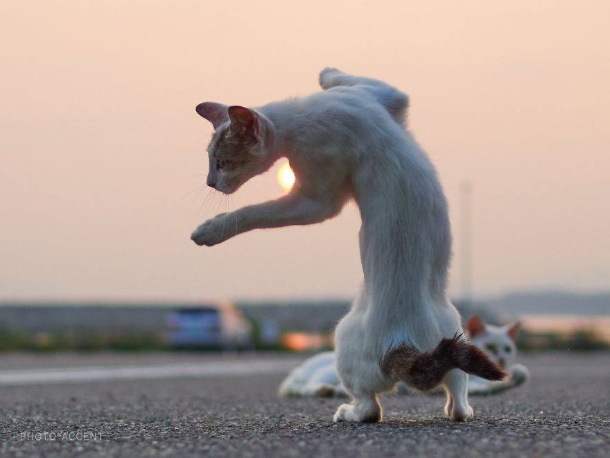 cat practicing the fusion technique