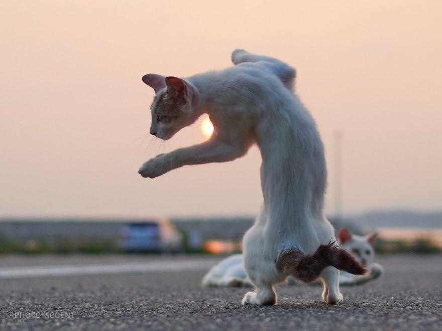cat practicing the fusion technique