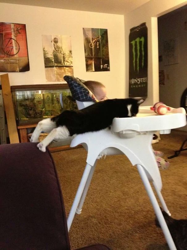 cat reaches baby high chair