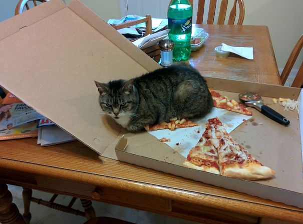 cat sits on pizza